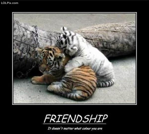Friendship Quotes Funny Pics : Animal jokes page zoomumba