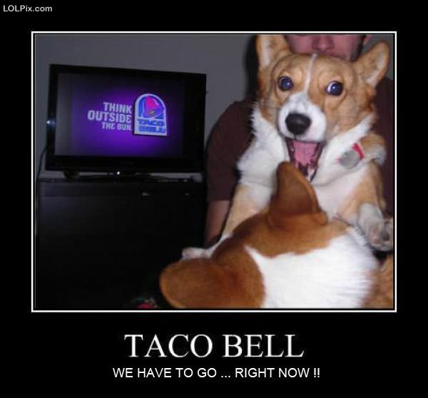 Old Taco Bell Cat And Dog