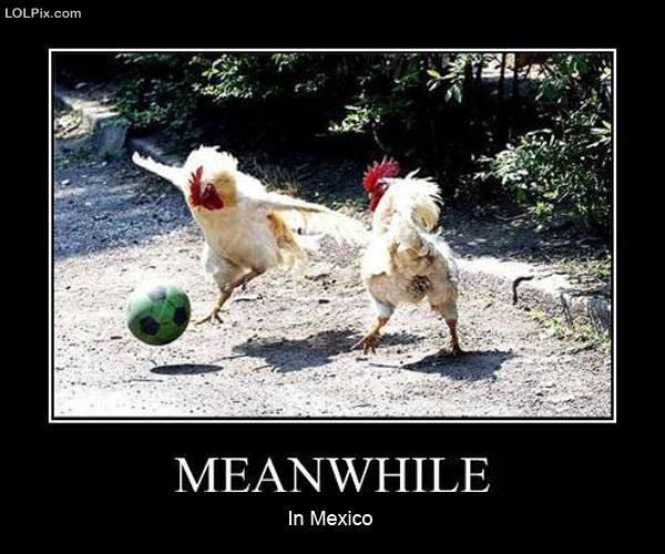 Image result for Mexico funny
