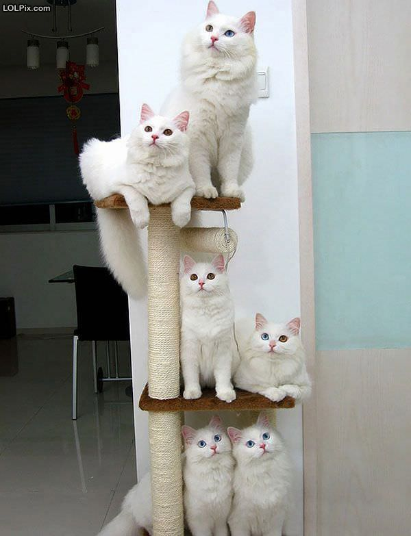 The Tower Of Cats