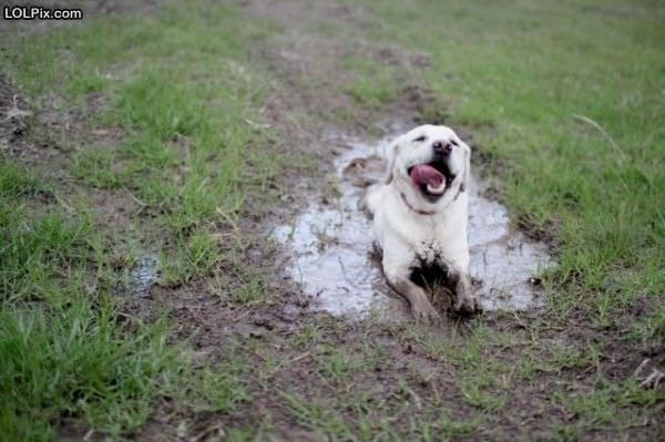 Just Enjoying The Mud