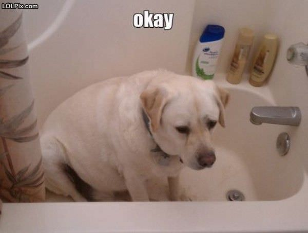 okay fine funny pictures 1239 pic 4