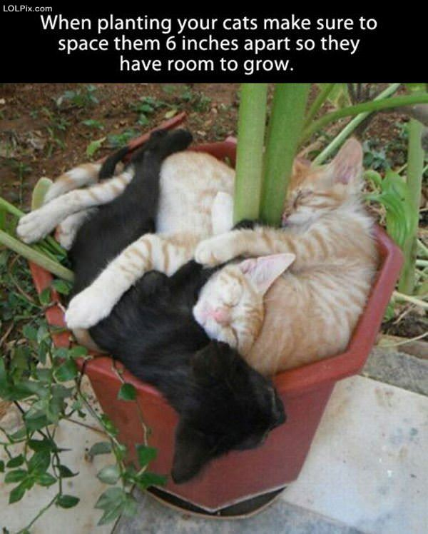 When Planting Cats