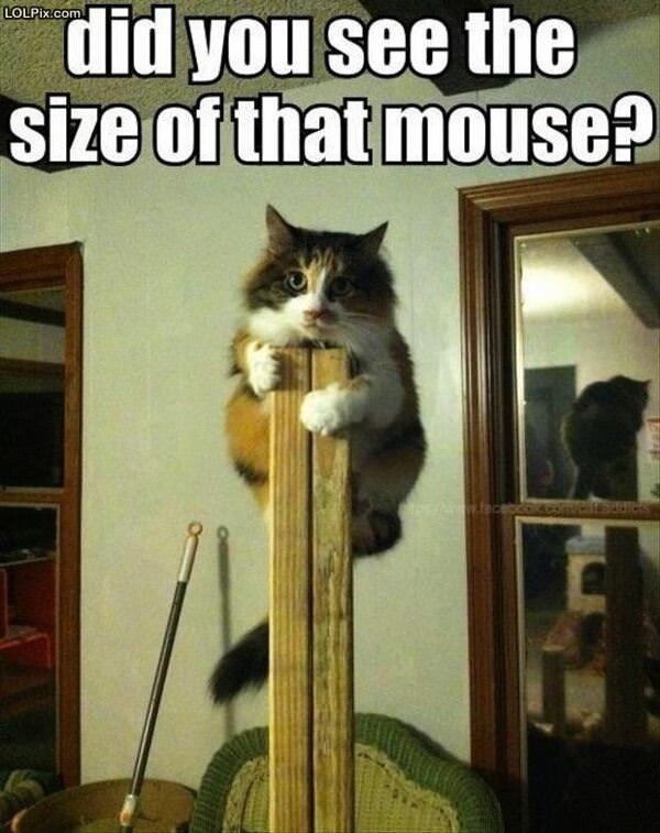 Size Of That Mouse