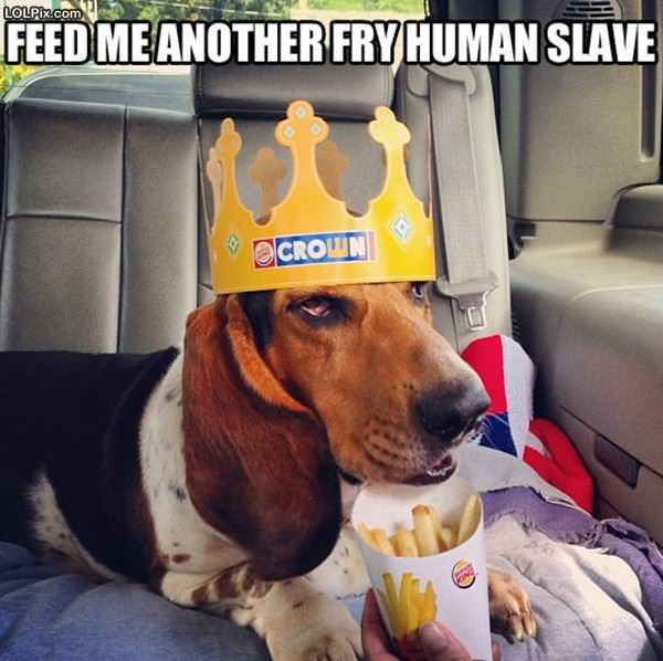 Feed Me Another Human