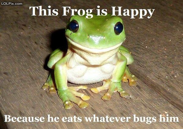 This Frog Is Happy