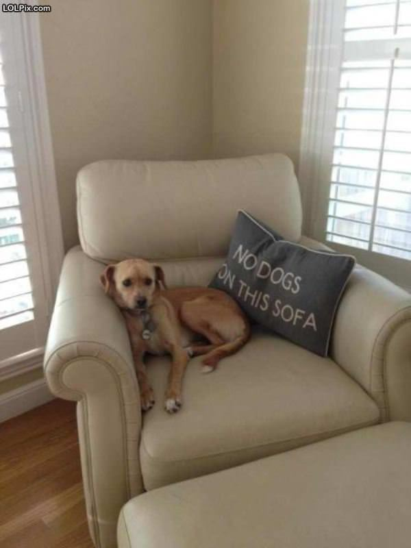 No Dogs On The Sofa