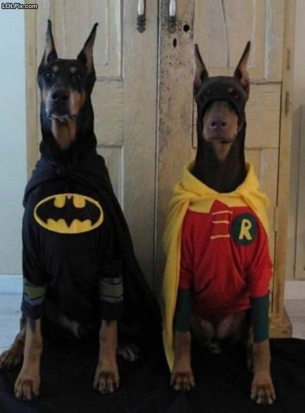 Crime Fighting Dogs