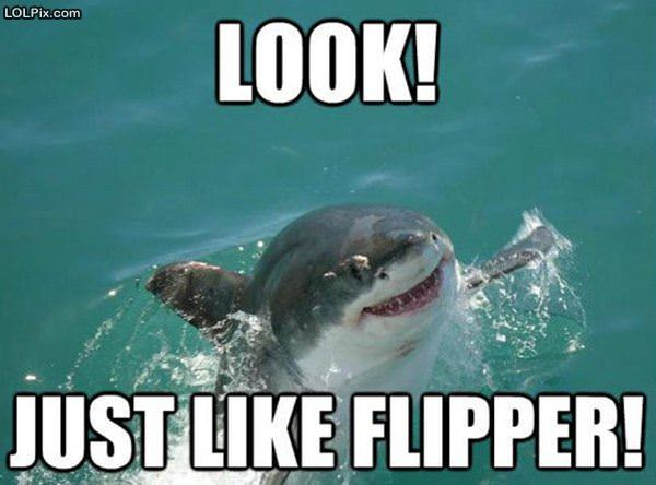Just Like Flipper