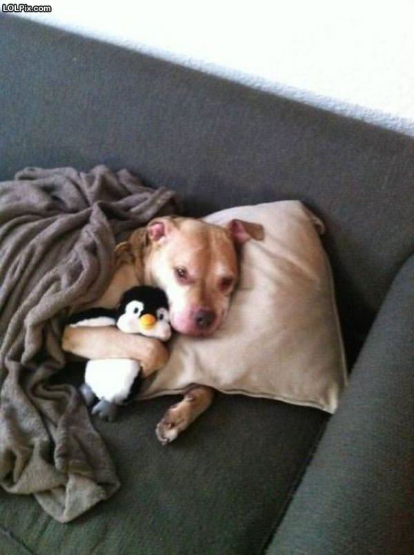 Tucked In With Penguin