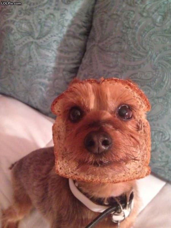 I Eated The Bread