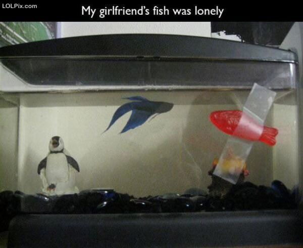 Lonely Fish