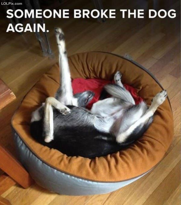 Dog Is Broken