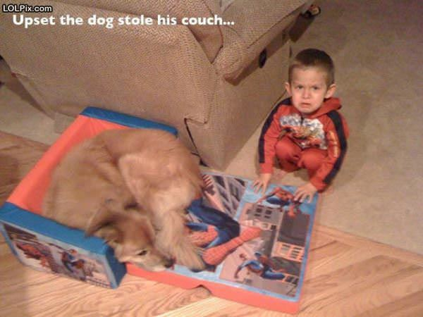 Dog Stole The Couch