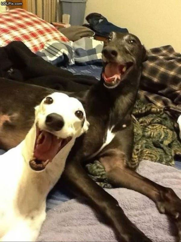 Such Very Happy Dogs