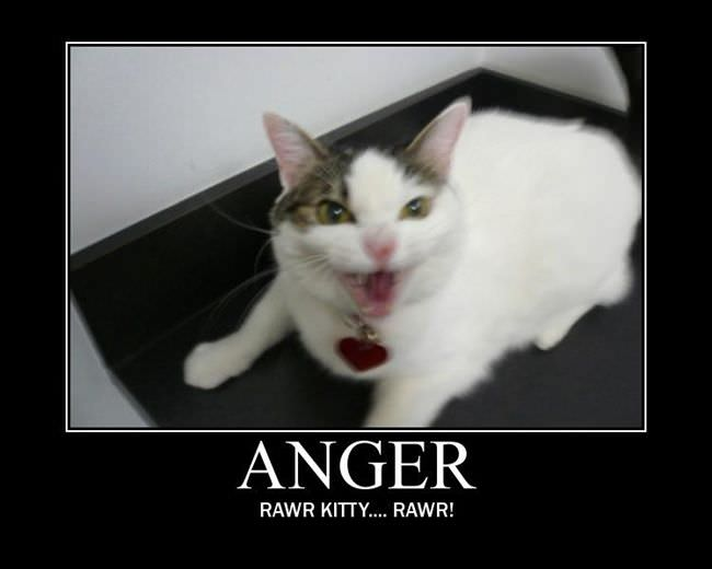 Viewing Page 3/22 from Funny Pictures 177 (Anger Kitty) Posted 11/29 ...