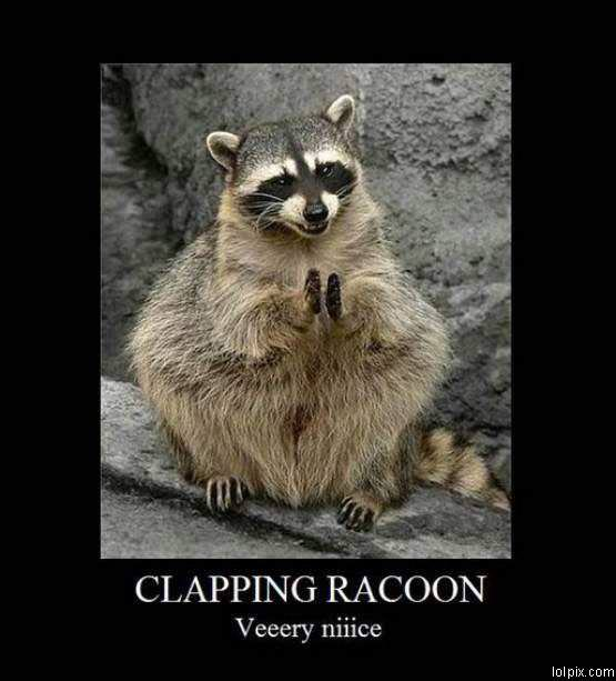 Funny Meme Applause : Clapping racoon funny pictures pic