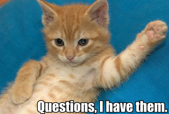 Cat Has Questions | Funny Pictures 380 Pic# 4
