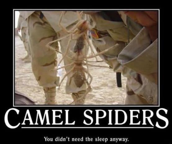 Viewing Page 3/18 from Funny Pictures 442 (Camel Spiders) Posted 12/9 ...