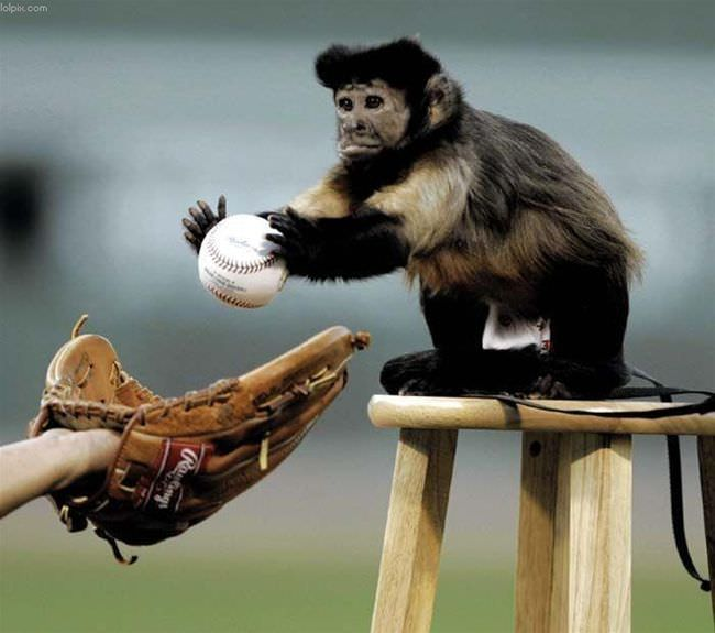 Monkey Playing Baseball