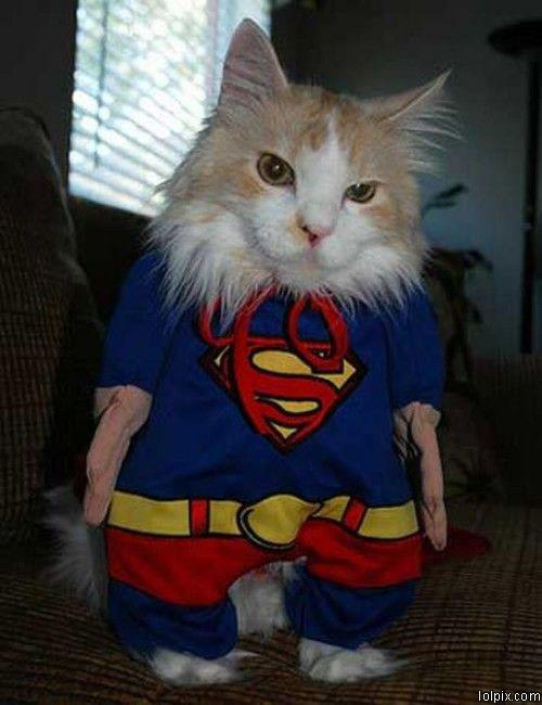 super funny cat pictures - photo #22