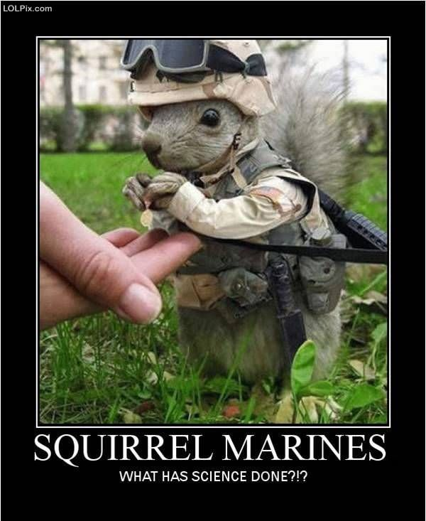 Viewing Page 15/16 from Funny Pictures 712 (Squirrel Marines) Posted 1 ...