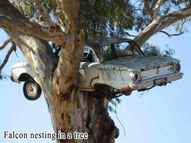 nesting in a tree