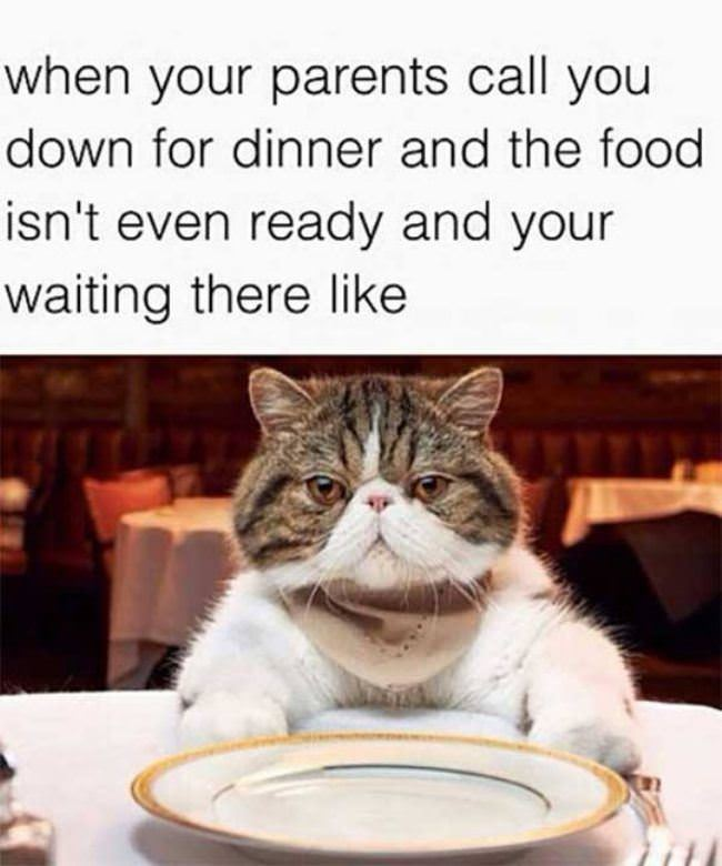 http://www.lolpix.com/pictures/2014_11/Waiting.jpg