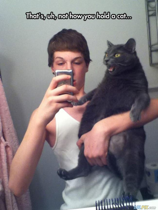 not how you hold a cat