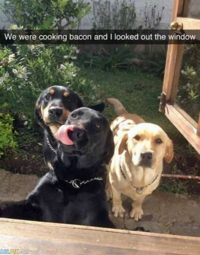 we want bacon too