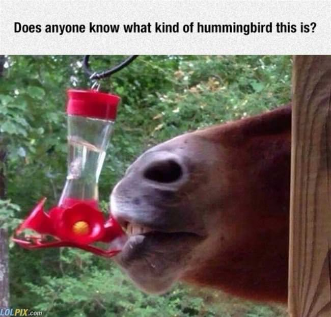 anyone know what kind of hummingbird