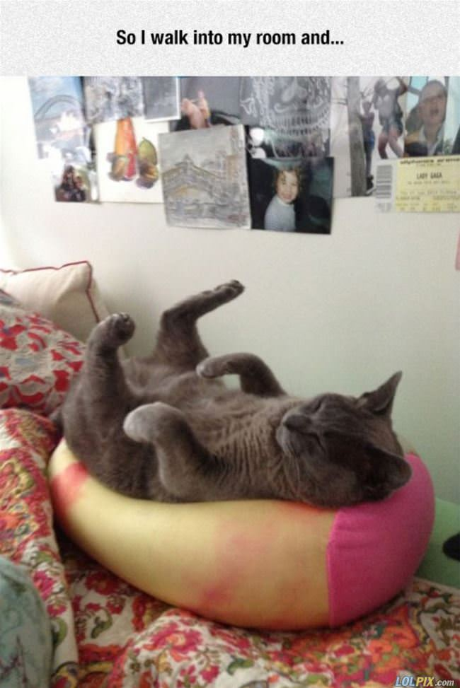 that is one relaxed cat