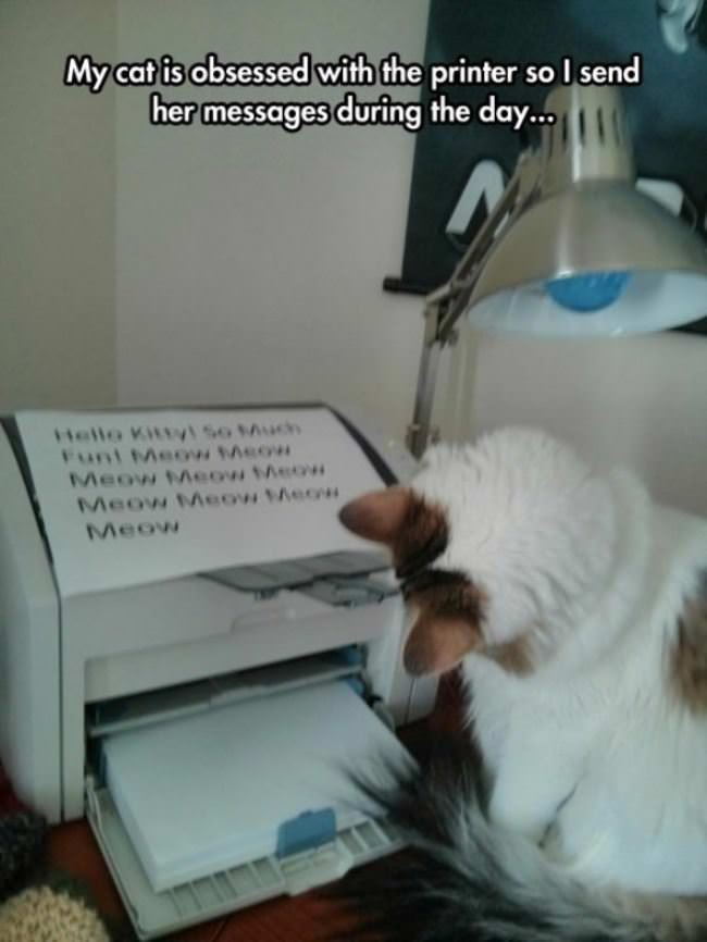 cat is obsessed with the printer