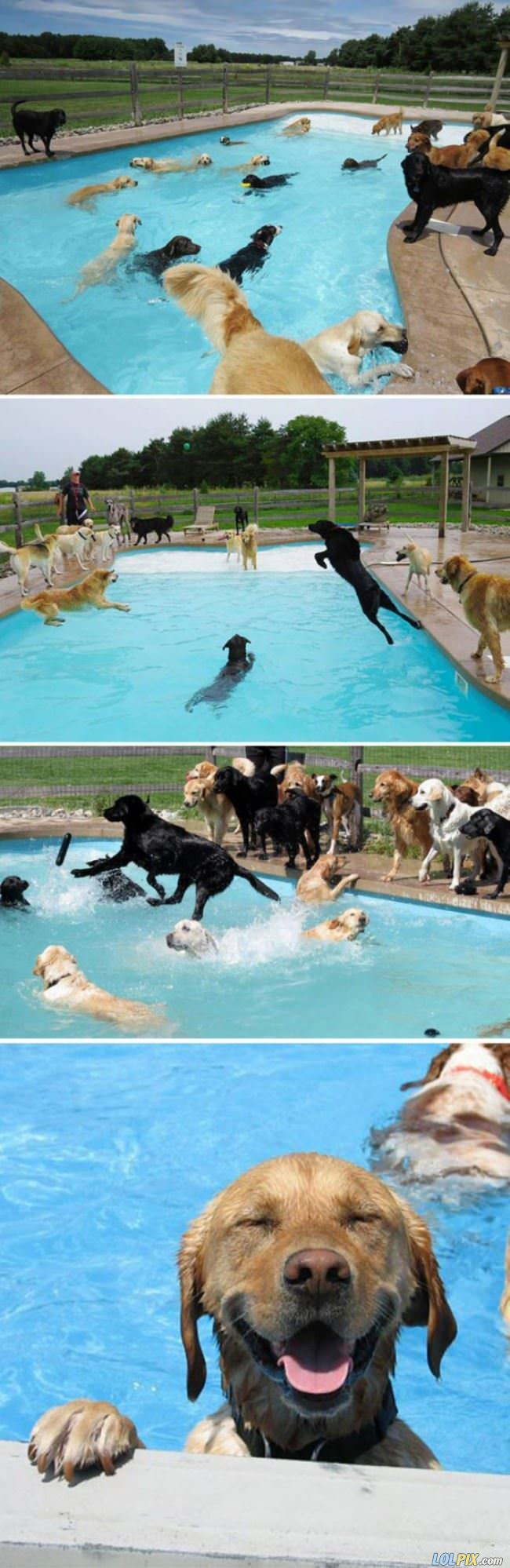 the dog pool