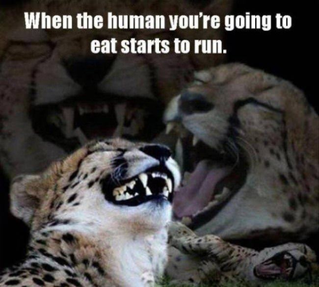 when the human starts to run