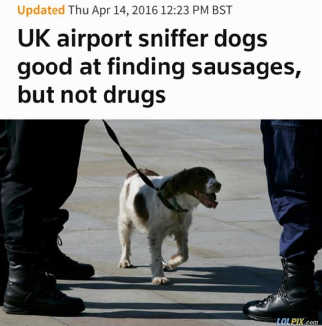 not great drug dogs