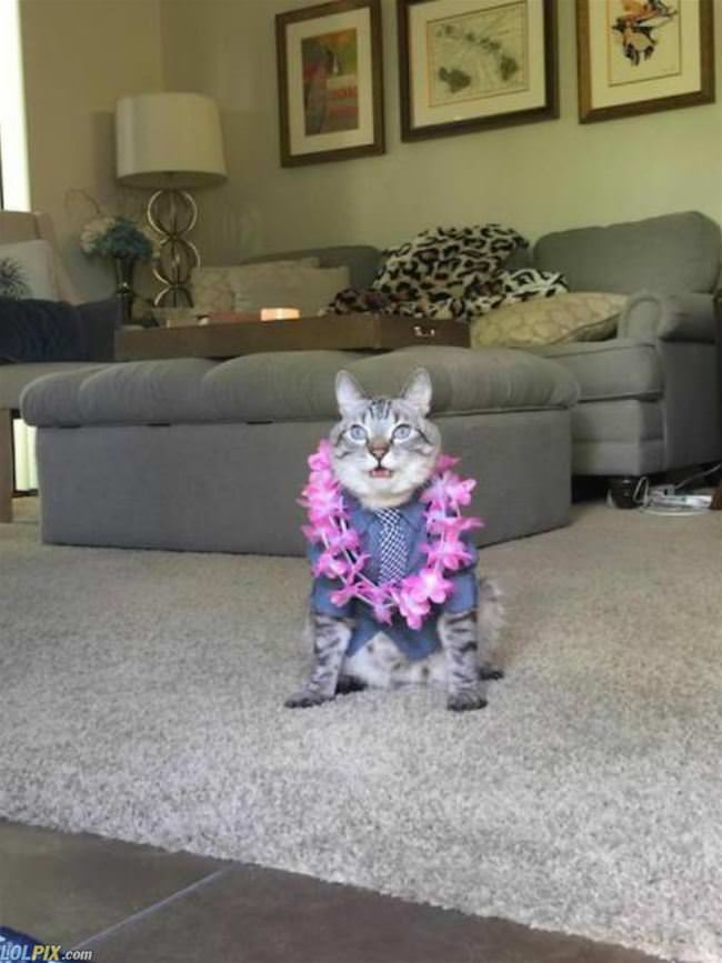 ready to party it up cat