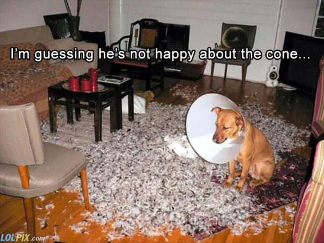 do not like the cone