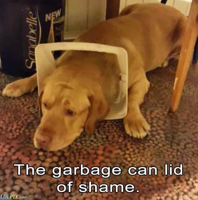 the garbage cat lid of shame