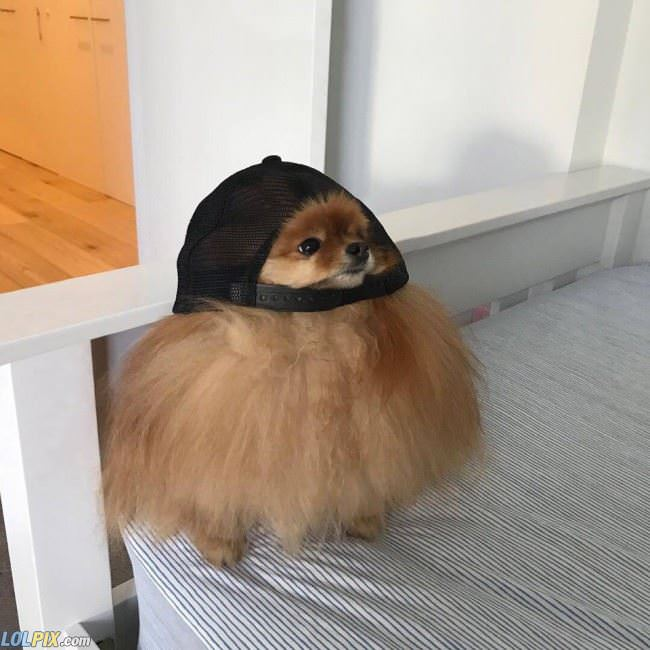 this hat is a little too big