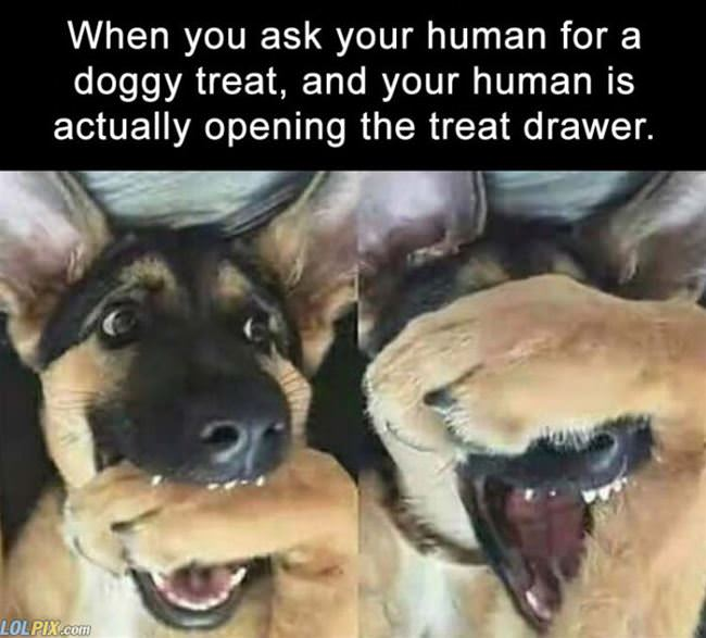 asking your human for a treat