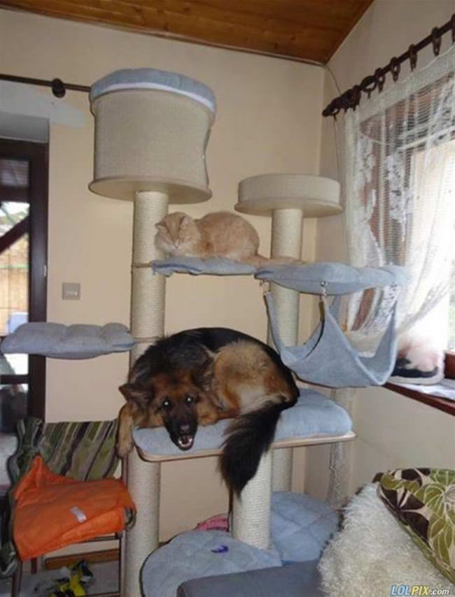 when the dog spends too much time with the cat