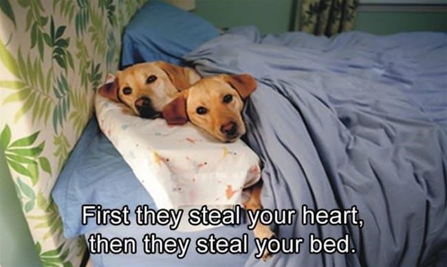 first they steal your heart