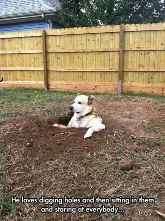 he loves digging holes