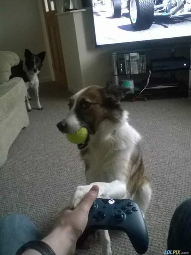 please its time to play