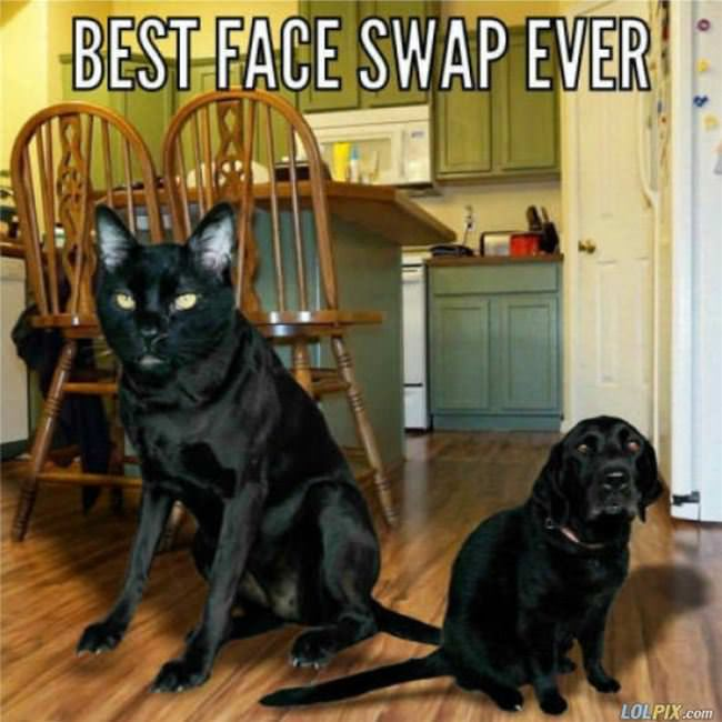 the best face swap ever
