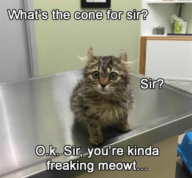 what is the cone for