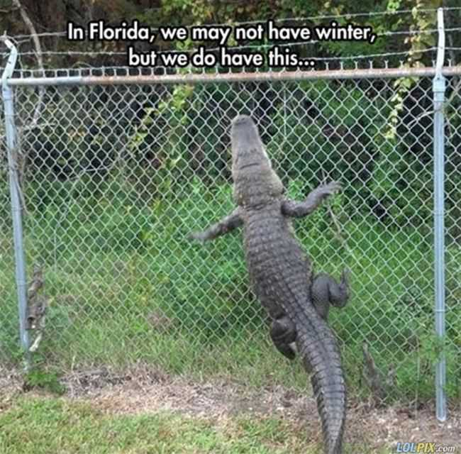 no winters in florida