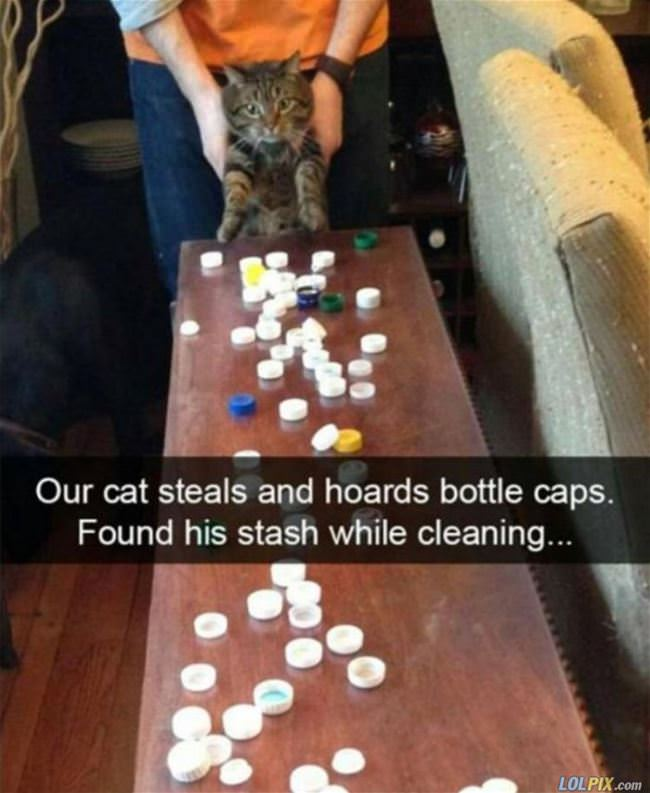 our cat steals bottle caps