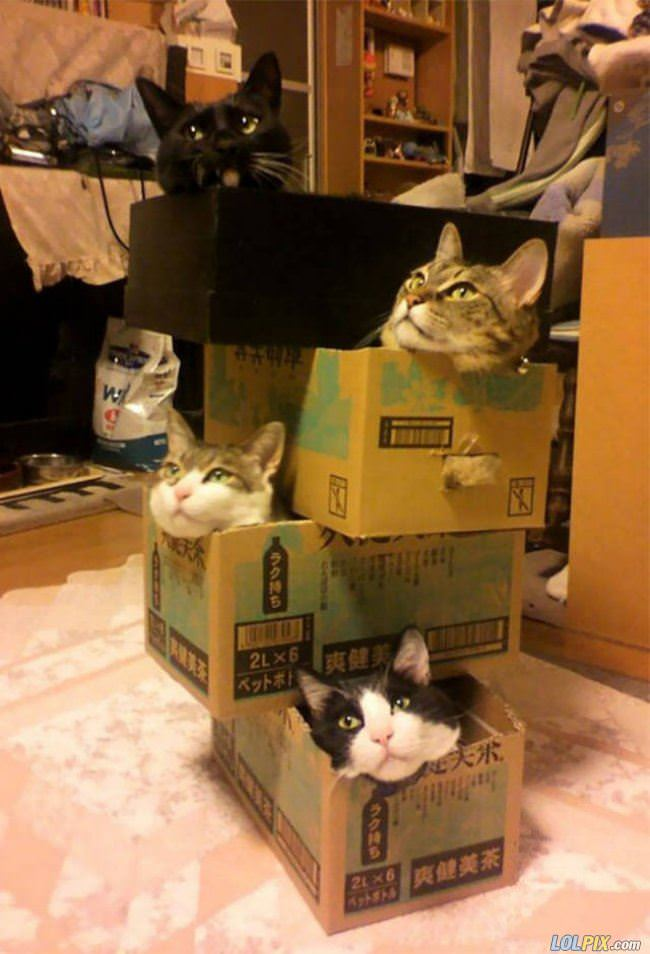 a tower of cats